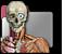 Länk till våra Anatomisidor